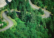 Road winding through forest area, aerial view