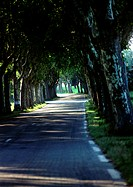 Road through alley of trees