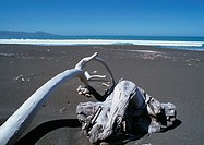 New Zealand, driftwood on beach