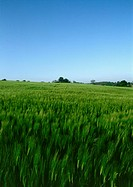 France, Picardy, green field of barley, blue sky