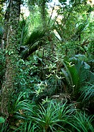New Zealand, vegetation in Paparoa National Park