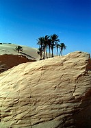 Tunisia, Sahara Desert, palm trees on large rock in front of dunes