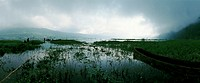 Indonesia, marshy landscape, panoramic view