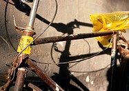 Bicycle, close-up