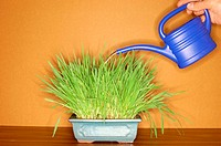 Watering can and plant (thumbnail)