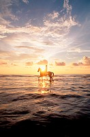 Person riding horse in sea at sunset