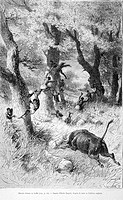 Escaping from a buffalo, drawing by E. Bayard. Engraving from 'Le tour du monde'