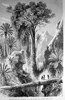 Madagascar, drawing by E. de Bérard. Engraving from ´Le tour du monde´