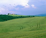 Fields and villa near Pienza. Tuscany. Italy