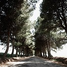 Road running through an avenue of trees (thumbnail)