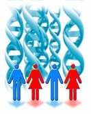 Genetic sexuality. Conceptual computer artwork of male and female symbols in front of DNA helices (deoxyribonucleic acid), representing the genet...