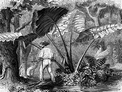 Mexiko hist.- Landschaften, Chiapas, Urwald bei Palenque, Xylografie nach Zeichung von M.A. Morellet, 1890  Dschungel, Botanik, Pflanzen, Wald, Mann m...