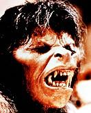 C Film, ´American Werewolf´ (The american werewolf in London), USA 1981, Regie: John Landis, Szene mit: David Naughton,  werwolf, sich verwandelnd, ho...