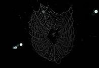 Zoologie, Insekten, Spinnen, Spinnennetz mit Tautropfen im Gegenlicht,