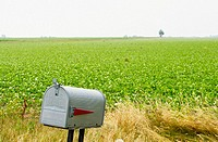 Gray mailbox near soybean field, flat prairie land. Arthur. Illinois, USA