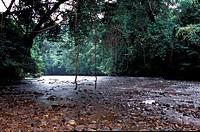 Sungai Tahan, Taman Negara, Pahang, Malaysia