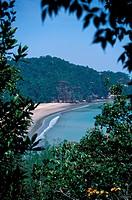 Teluk Assam, Bako National Park, Sarawak, Malaysia
