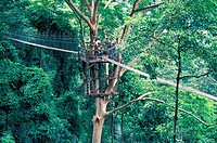 Canopy walkway in a forest reserve, Malaysia
