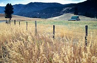 Greenroofed barn in the  Wallowa Valley and wheat field. Eagle Cap Wilderness at the background. Oregon, USA