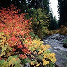 Fall colors in North Santiam River, Willamette National Forest, Albany Oregon, USA
