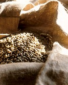 Unroasted coffee beans in a sack