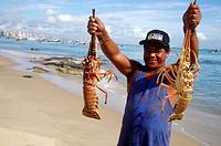 Freshly caught lobster on shore at Fortaleza, Brazil