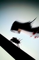 Bug being squashed with shoe