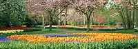 Keukenhof Gardens in Lisse, Holland