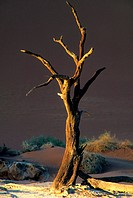 Dead Tree Pan, Sossusvlei, Namibia