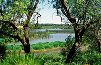 'Acebuche' lagoon in Doñana National Park. Huelva province, Andalusia. Spain