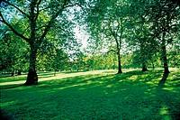 Tree, Trees,