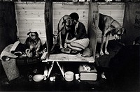 Young female dog-owner sitting alongside her animal in a dog show preparation booth, with dogs on either side of the booth, taken at Cruft´s Dog Show,...