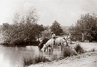 Black and white photograph by Colonel Gale showing two horses (one with a rider) drinking at a country pond.