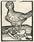 Woodcut of  a winged harpy and her prey. In Greek mythology, these were creatures with women's heads and sharp claws. Illustration from 'Hortus Sanita...