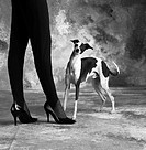 high-heeled woman with Greyhound