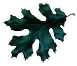 Blue/Green fall leaf