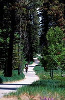 Bikers on Path, Lake Tahoe, California