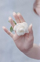 Woman´s Hand with White Rose