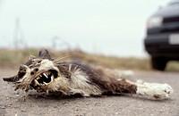 Tote Katze am Straßenrand