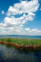 Bolsena Lake. Lazio, Italy
