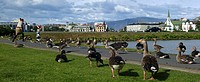 A woman and a child among geese by the pond in Reykjavik