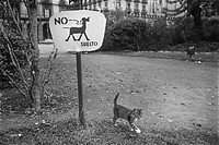 Cat walking freely where airing dogs prohibited