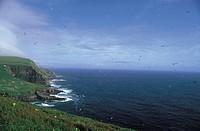 denmark, faroe islands, mykines island