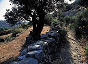greece, sifnos, a path that leads to profitis ilias monastery