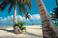 Tropical beach and palm trees. Bay islands. Caribbean. Honduras