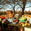 Apple harvest: several types of apple in baskets and bowls