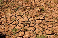 Cracked soil, agriculture, Brazil