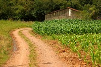 Ranch, plantations, corn, agriculture, Brazil