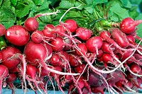 Radishes, market, agriculture, Brazil