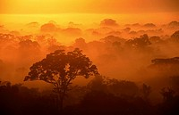 Sunrise on the rainforest. Tambopata National Reserve, Peru